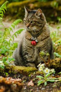 Joli chat avec son joli grelot